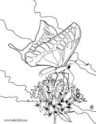 colorful butterfly coloring pages hellokids com