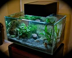 aquariums biorb and fluval aquariums fish and fish tanks