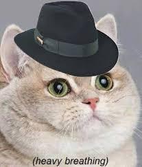 Fat Cat Heavy Breathing Meme - pizzahut you tease funny