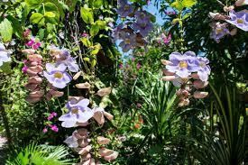 barney u0027s flower u0026hummingbird garden jamaica barney u0027s