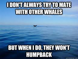 Whale Meme - loneliest whale in the world loneliest whale in the world know