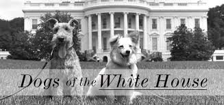 dogs of the white house get leashed magazine