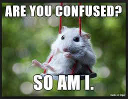 Rodent Meme - 20 mouse memes you ll find adorable sayingimages com