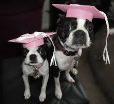 dog graduation cap and gown pet graduation caps 4 steps with pictures
