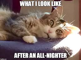 Sleepy Cat Meme - sleepless cat imgflip