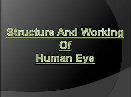 structure and working of human eye in hindi youtube