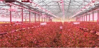 grow light indoor garden led grow light