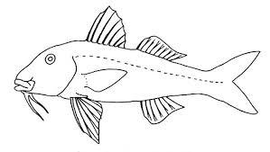 identification keys key shore fish families hawaii