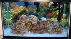 Live Rock Aquascaping Ideas Saltwater Aquarium Setup Marine Aquarium Setup