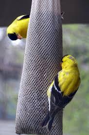 penelopedia nature and garden in southern minnesota feeder