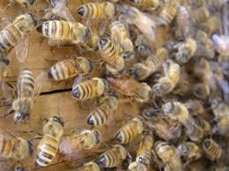 bee u0027 prepares attendees for beekeeping journey mountain
