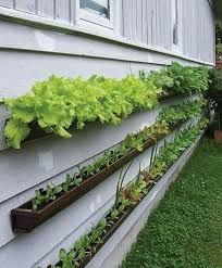 Small Vegetable Garden Ideas Get Started Growing 5 Easy Small Vegetable Garden Ideas To Try