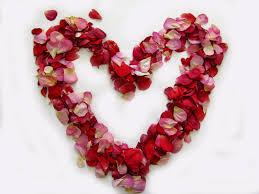 real petals beautiful petal confetti from the real flower petal confetti