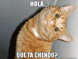 Hola Meme - hola que ta chendo meme de gatox imagenes memes