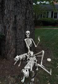 skeleton crew wildtrumpetvine