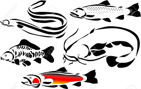 hook clipart carp fish pencil and in color hook clipart carp fish