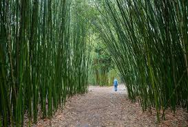 Largest Botanical Garden by America U0027s 15 Top Botanical Gardens Thrillist