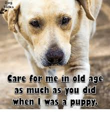 Much Dog Meme - dog talks care for me in old age as much as you did when i was a