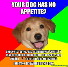 Dog Teeth Meme - your dog has no appetite check his teeths bad teeth heavily coated
