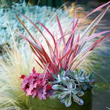 fall container gardens sunset