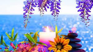 Cute Flower Wallpapers - flower lovely flowers beautiful purple mac desktop backgrounds