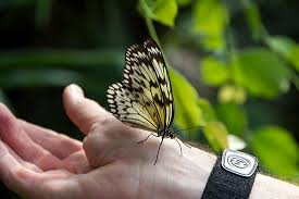 butterfly landed on my picture of butterfly gardens