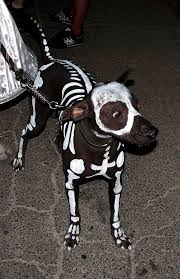 Zombie Dog Halloween Costume 11 Terrifying Ly Hilarious Dog Costumes Rover Blog