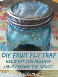 Homemade Fly Trap by Diy Hanging Fly Trap Buzzchat Co Do It Yourself