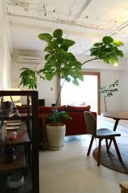 29 best plants images on pinterest gardening indoor plants and