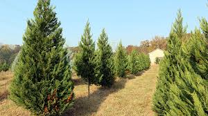 south carolina s tree farmers plenty of reasons to