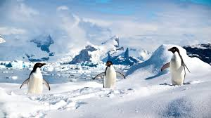 antarctica u0027s wildlife in a changing climate