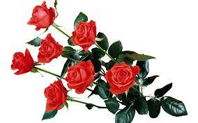 Flower Companies Mumbaionlineflorists Reviews U2013 Mumbaionlineflorists Com Florist
