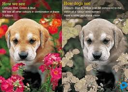 animals dog vision cat vision u0026 pundit cafe