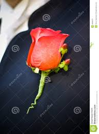 Groom S Boutonniere Groom U0027s Boutonniere Royalty Free Stock Images Image 4080679