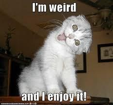 Weird Cat Meme - i m weird and i enjoy it grumpy cat meme grumpy cat pictures on