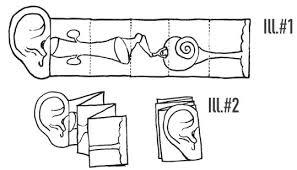 lesson 2 inside the ear scholastic com