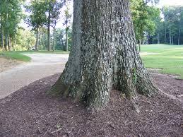 oak tree base cathy flanagan flickr