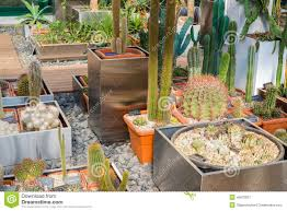 cactus and succulents plants in garden stock image image 45673837