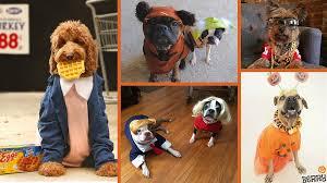 Ewok Dog Halloween Costume Howl Ween 2016 5 Cool Halloween Dog Costumes Dog Tails
