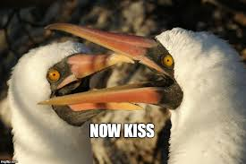 Now Kiss Meme Generator - image tagged in birds imgflip