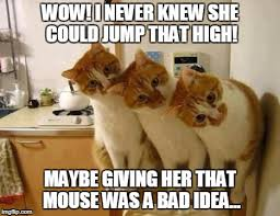 Funny Memes Animals - image tagged in 3 funny cats funny memes memes animals funny