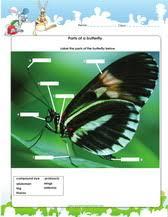1st grade science worksheets for kids pdf