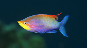 rainbow fish aquarium fish exotic fish