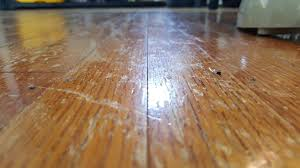 Hardwood Floor Nails Nails In Wood Floor Keep Coming Up Homeimprovement