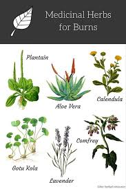 Home Remedies For Small Burns - herbs to treat and relief burns benefits uses and side effects