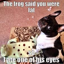French Bulldog Meme - and then i started frothing at the mouth the american gentleman