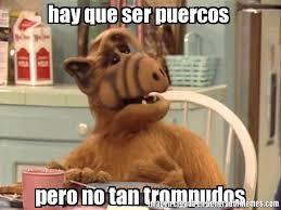 Alf Meme - memes de alf galeria 611 imagenes graciosas