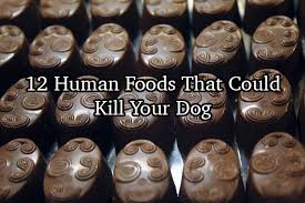 12 human foods you didn u0027t know could kill your dog
