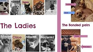 Dogs For The Blind Adoption Friends With Four Paws Rescue