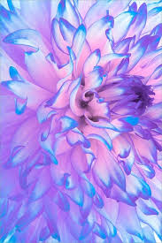 purple and blue flowers pink purple and blue flowers alta mente repostum pinteres